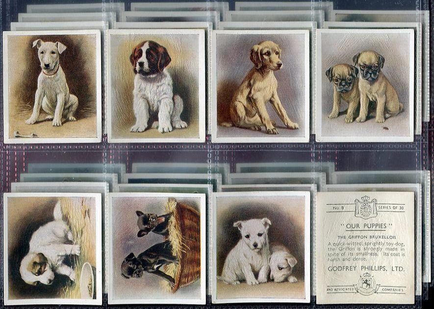 Tobacco Card Set Godfrey Phillips Our Puppies Pedigree Dog Puppy 1936